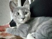 В самые заботливые руки котёнок девочка ЛАПКА.