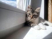 Котенок Соня ищет дом и любящего хозяина!