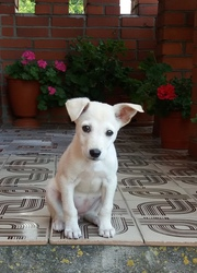 Добрый день!Помогите найти нового хозяина для собаки!Собака была найде