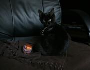 В дар котенок,  возраст 3 месяца,  девочка. Чисто черная. Здорова. к лот