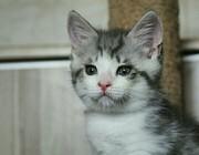 Котенок ищет заботливую семью и дом!   Малышу 1, 5 месяца. Просто краси