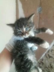 СРОЧНО!!! Новые котята в САХе!  Котята,  очень напуганы,  кушают сами. С