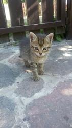 Хорошенький котенок в поиске дома! Мальчик,  возраст примерно 2-2, 5 мес