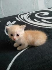 Рыженький котенок в поиске хозяев! Мальчик,  ручной,  ласковый,  игривый.