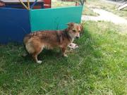 Собачка(предположительно девочка) прибилась в дет.сад. ищет передержку