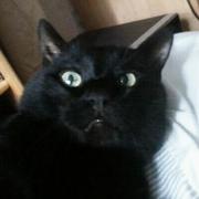 В ответственные руки шикарный кот Маркиз. Чёрный окрас,  зеленые глаза,