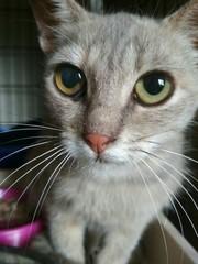 Кошечка Рута ищет ДОМ!  Рута - очень красивая кошечка интересного окра