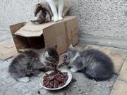 Может у кого-то есть желание и возможность взять котенка? Три котенка,