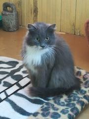 Ищем дом для молодой кошечки!  Возраст около года,  спокойная и ласкова