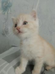 Маленький котенок по имени Персик ищет дом.Возраст 1, 5 месяца. Очень в