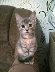 Гродно Котёнок Мона ищет дом!