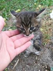 СОС! Маленький котенок прибился к недостроенному дому. Хозяева там быв
