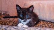 Котенок по имени Джем ищет дом. Полтора месяца,  у ветеринара был - здо