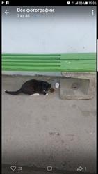 Срочно ищет дом или передержку кот,  1год!!! Не кастрирован. Котик ласк