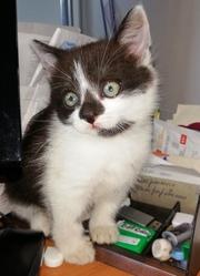 Три маленьких котенка ищут семью. Находятся в г. Гродно,  р-н Карского.