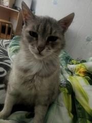 кошка Мурка, ей примерно 3 года,  ищет дом,  желательно частный дом с вых