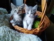 Самые милые зайчики ))) точнее котятки ∆∆ обалденно красивенькие ищут