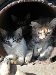 ОЧЕНЬ СРОЧНО НУЖНА ПЕРЕДЕРЖКА  Ищем передержку для троих котят,  все де
