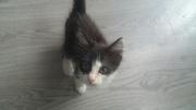 Найден котенок! Кошечка на вид месяца два. Возила к ветеренару- котено