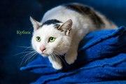 Друзья,  ищет дом кот по имени Кубик. Кубику полтора-два года,  очень за