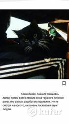 Молодая красавица кошка ищет дом. Ладит с детьми и другими животными,