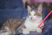 Красивый котик ищет дом!   Шикарный полуторагодовалый кот -ласковый и