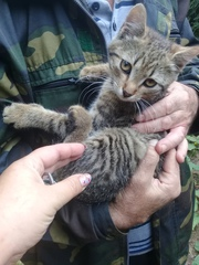 срочно котенок 2 месяца -кот. Ищет передержку или дом . Срочно. времен