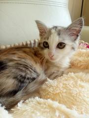 Симпатичный котёнок в ДАР!   Мальчик ,  2, 5 месяца. Красивый окрас. Игр