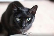 Багира ждет своего ЧЕЛОВЕКА!