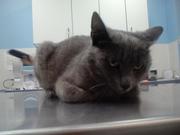 Присмотритесь к котику, может кто то узнает своего питомца, был найден в