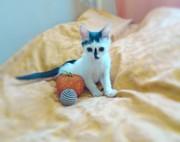 Очаровательный котенок Мультик ищет дом Мультику около 2х месяцев,  лас