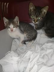 Новые котята!!!   Нескончаемый поток котят... Сажать их некуда. Животн