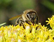 Мёд пчелиный натуральный