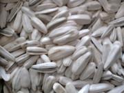 Турецкая белая полосатая семечка